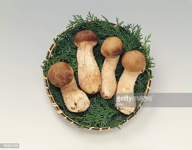 Matsutake Mushrooms on bamboo basket, high angle view