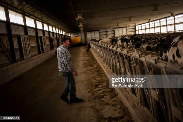 Matt Gartman gets ready to clean up before laying down feed as he and his brother Luke work on their family farm Philmarru farms milking their herd...
