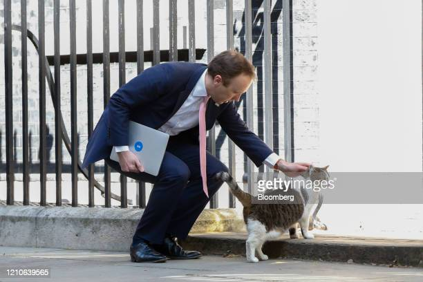 Matt Hancock UK health secretary strokes Larry the Downing Street cat a brown and white tabby rehomed from Battersea Dogs and Cats Home as he departs...