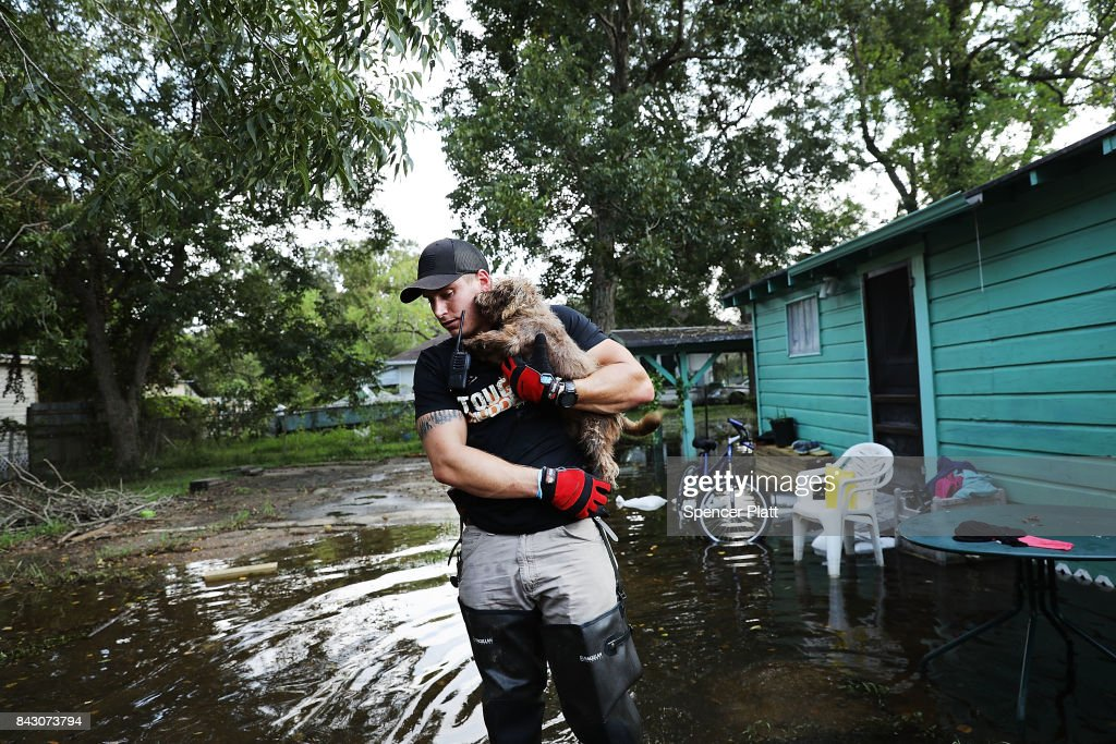 Matt Murray, a volunteer with an animal rescue organization, carries a small dog he found abandoned beside a flooded home on September 5, 2017 in Orange, Texas.Thousands of pets and livestock have either run away or been left to fend for themselves after Hurricane Harvey ravaged parts of the state of Texas.