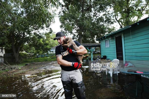 Matt Murray, a volunteer with an animal rescue organization, carries a small dog he found abandoned beside a flooded home on September 5, 2017 in...