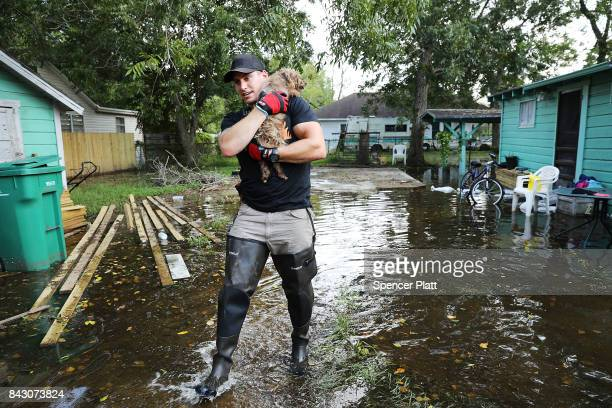 Matt Murray a volunteer with an animal rescue organization carries a small dog he found abandoned beside a flooded home on September 5 2017 in Orange...
