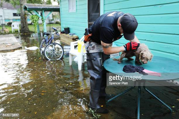 Matt Murray a volunteer with an animal rescue organization pets a small dog he found abandoned beside a flooded home on September 5 2017 in Orange...