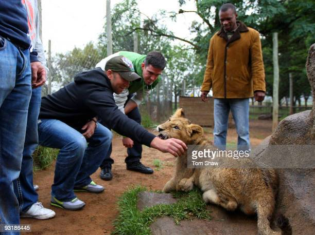 Matt Prior and Kevin Pietersen of England stroke a lion cub during a team visit to the Johannesburg Lion Park on November 18 2009 in Johannesburg...