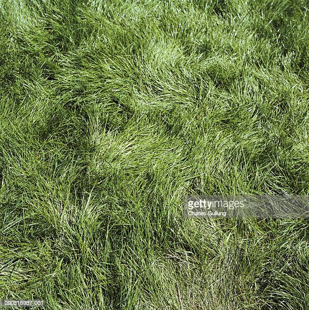 Matted-down grass, full frame, overhead view