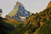 Matterhorn above zermatt pine trees woodland idyllic valley, Swiss Alps