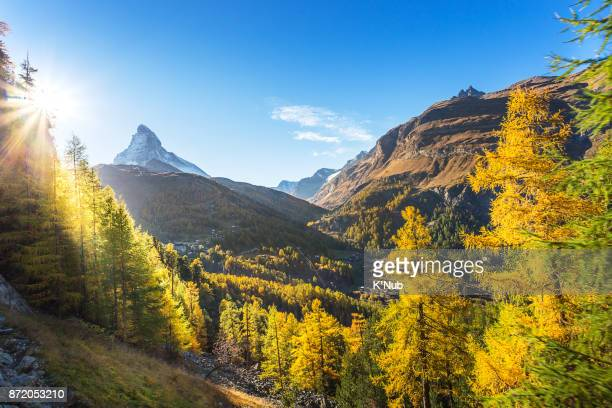 Matterhorn mountain with beautiful sun light through the pines i