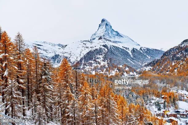 matterhorn, zermatt, switzerland - larch tree stock pictures, royalty-free photos & images