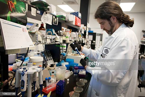 Matthew Mendel a Sangamo BioSciences Inc research associate plates bacteria at the Sangamo BioSciences lab in Point Richmond California US on Tuesday...