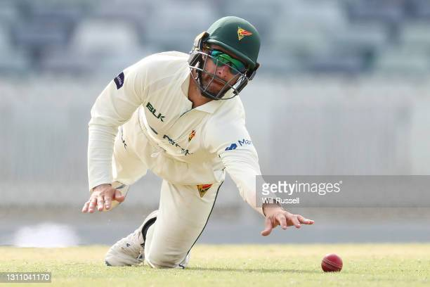 Matthew Wade of the Tigers attempts to takes a catch to dismiss the ball during day four of the Sheffield Shield match between Western Australia and...