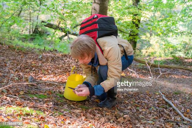 mature 55-years-old woman looking for mushrooms in the forest in autumn. - 55 59 years stock pictures, royalty-free photos & images