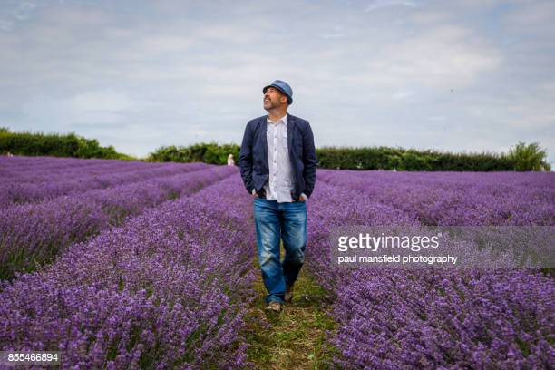 mature adult male walking through lavender field - chichester stock pictures, royalty-free photos & images