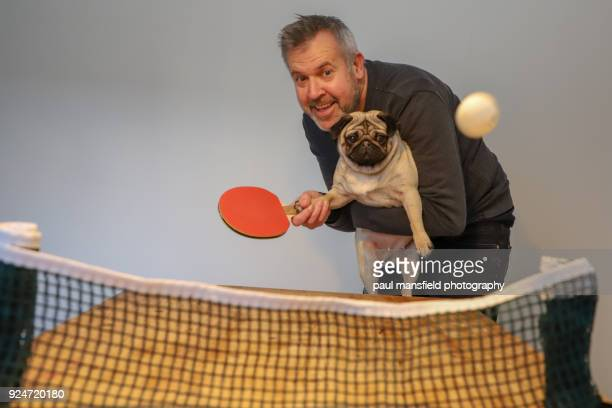 mature adult man and dog playing table tennis - funny ping pong stock pictures, royalty-free photos & images