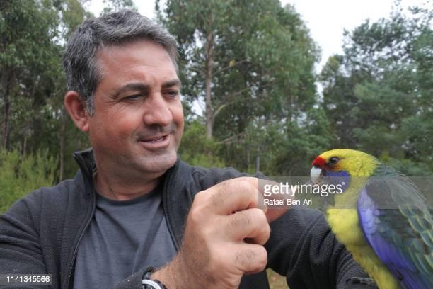 mature adult man feeding feeding green rosella bird - rafael ben ari stockfoto's en -beelden