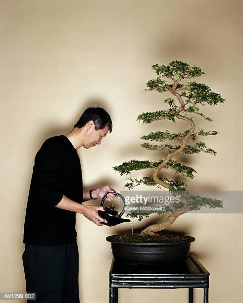 mature asian man watering azalea bonzai - 盆栽 ストックフォトと画像