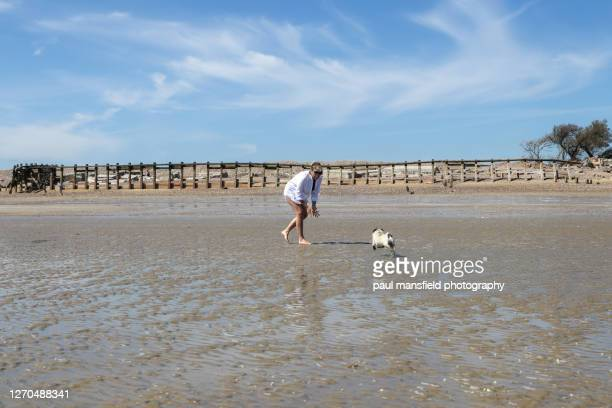 "mature blond lady and pug on beach - ""paul mansfield photography"" stock pictures, royalty-free photos & images"