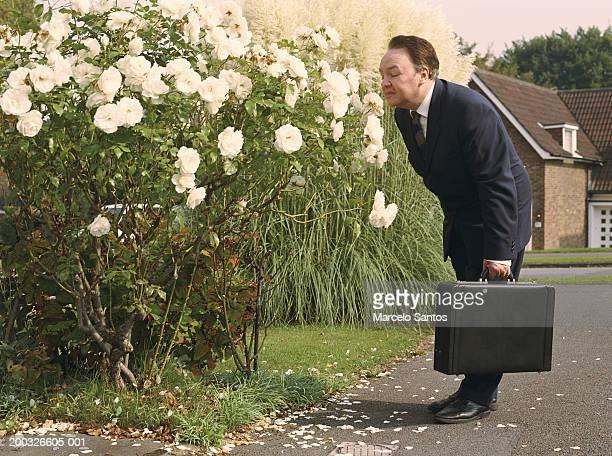 Mature businessman bending over smelling rose bush