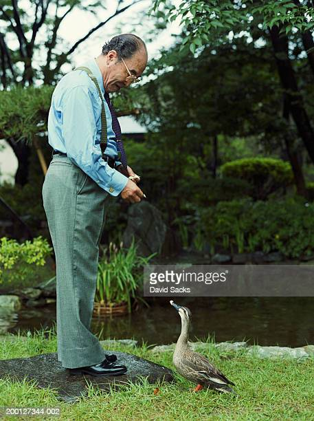 mature businessman feeding duck, side view - duck bird stock pictures, royalty-free photos & images
