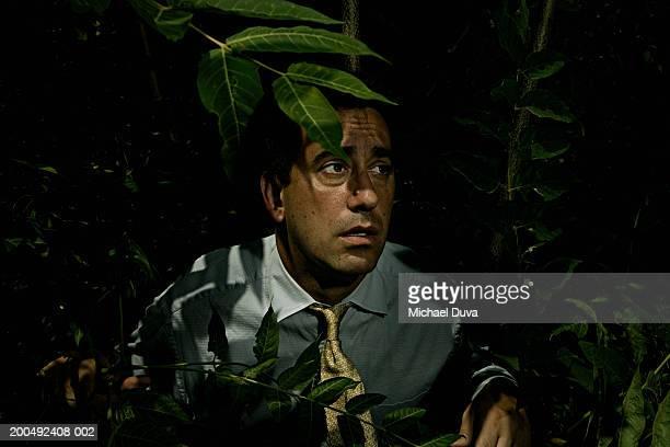 mature businessman in jungle - esconder imagens e fotografias de stock