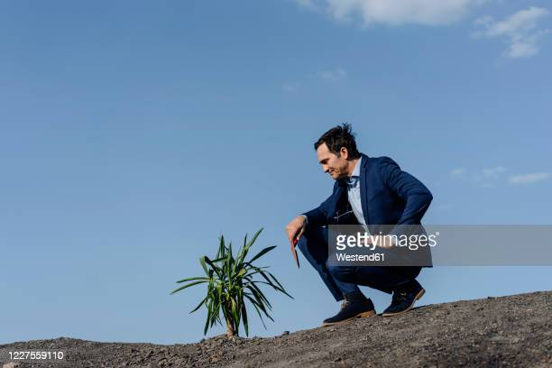 mature businessman with a plant crouching on a disused mine tip - しゃがむ ストックフォトと画像