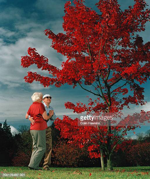 mature couple dancing by red maple tree, low angle view - colin hawkins stock pictures, royalty-free photos & images
