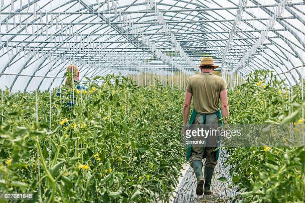 Mature couple in greenhouse