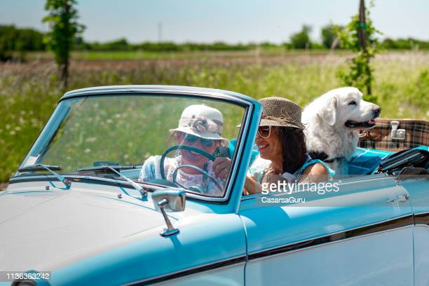 mature couple portrait on a road trip driving a vintage car with maremma sheepdog - pastore maremmano foto e immagini stock