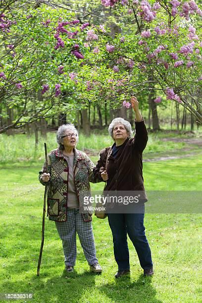 fille d'âge mûr et mère senior dans la nature park - chubby granny photos et images de collection