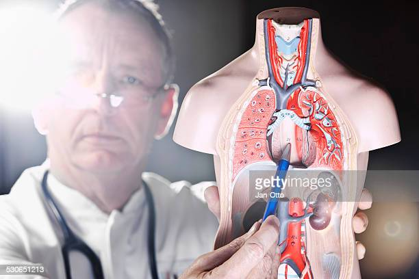 Mature doctor pointing at oesophagus