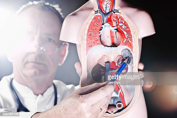 Mature doctor pointing at spleen