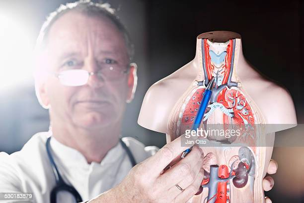 mature doctor pointing at thyroid gland - thyroid gland stock pictures, royalty-free photos & images