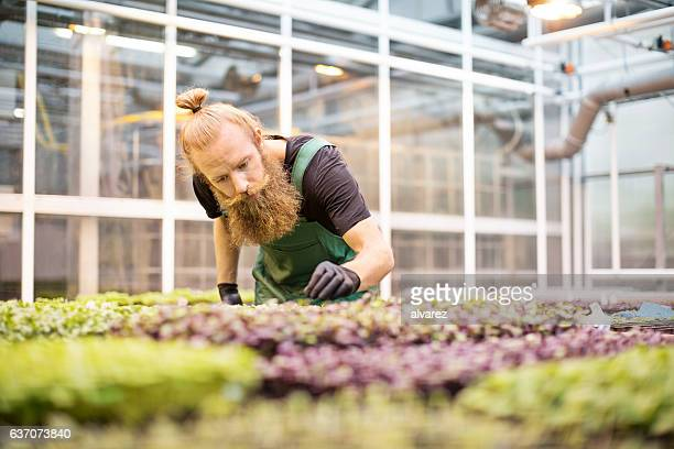 Mature farm worker checking seedlings