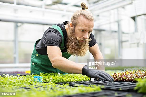 Mature farm worker working in greenhouse