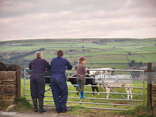 Mature farmer, adult son and grandson leaning on gate to cow field, rear view