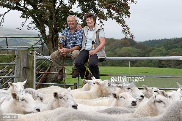 Mature farmer couple sitting on fence of sheep pen
