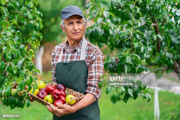 Mature farmer holding basket with apples
