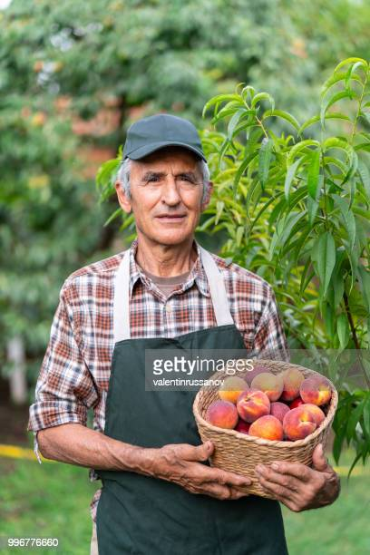 Mature farmer holding basket with peaches