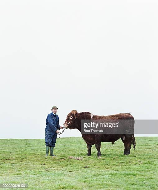 Mature farmer in field with South Devon bull, portrait