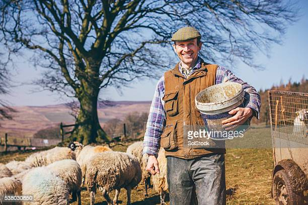mature farmer - shepherd stock pictures, royalty-free photos & images