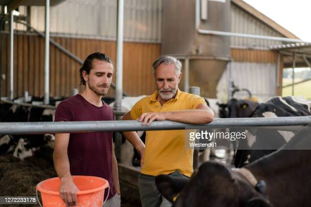 mature farmer with adult son at cow house on a farm - 後任 ストックフォトと画像
