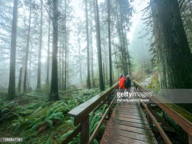 mature father and multi-ethnic daughter enjoying misty forest from bridge - british columbia stock pictures, royalty-free photos & images