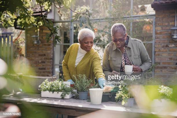 Mature Female Friends Gardening
