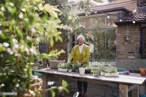 mature female gardening - retirement stock pictures, royalty-free photos & images
