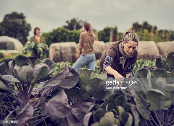 Mature female working on community allotment as peers talk in the background