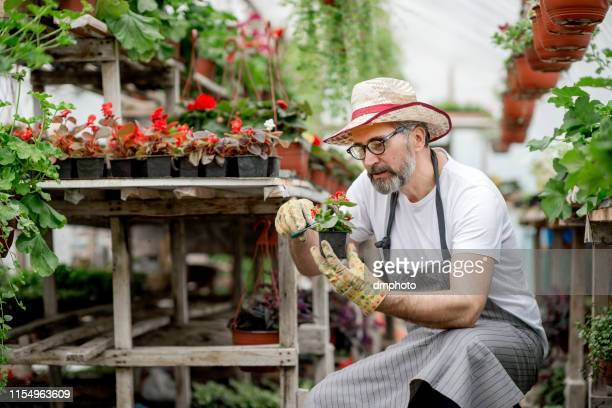 mature florist taking care of flowers - potting stock pictures, royalty-free photos & images