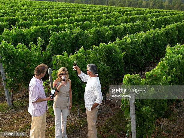 mature friends drinking wine in vineyard, elevated view - ボルドー ストックフォトと画像