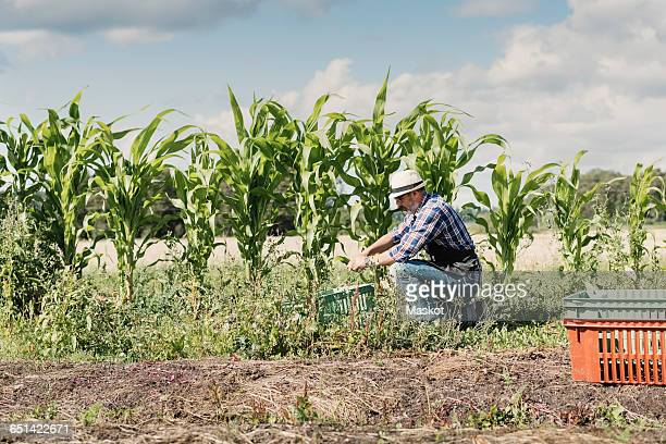 Mature gardener kneeling and working at farm against sky