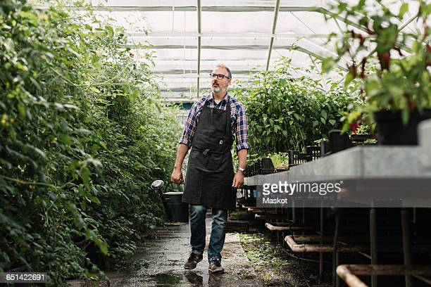 Mature gardener walking with watering can in greenhouse