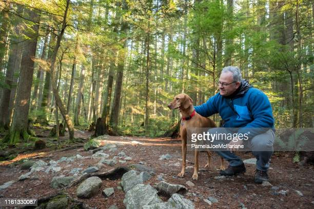 mature hiking man holding vizsla dog in sunlit forest - backpacker stock pictures, royalty-free photos & images