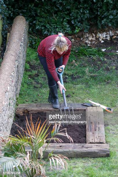"mature lady tending to a vegetable plot - ""paul mansfield photography"" stock pictures, royalty-free photos & images"